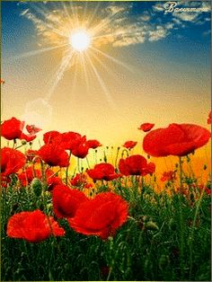 The Gifts of Sharon. Beautiful Nature Pictures, Nature Photos, Beautiful Landscapes, Beautiful Flowers, Red Poppies, Red Flowers, Roses Gif, Love Wallpapers Romantic, Corporate Flowers