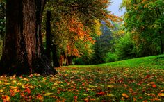 Autumn Leaves Background HD