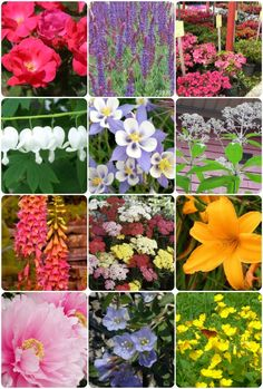 12 best flowers to grow in chicago...thought of yall @Lindsay Rand @Lindsey Springer @Jacquelyn Jeanes