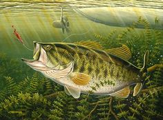 "paintings of large mouth bass | Working The Weeds"" - Largemouth Bass"