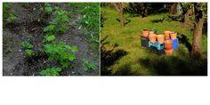 Gardening by M.W. Eye Photography, Gardening, Eyes, Lawn And Garden, Human Eye, Urban Homesteading, Horticulture