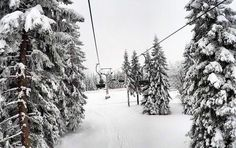 "58 Likes, 1 Comments - Teja Trstenjak (@tejcibejci) on Instagram: ""We ski. #skiingday #ski #snow #snowday #skiday #skiing #nature #tree #needforski #love #nice…"""