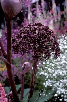 Cottage Garden Designs Affordable Methods - Lilly is Love Black Garden, Purple Garden, Unusual Flowers, Beautiful Flowers, Beautiful Pictures, Arrangements Ikebana, Architectural Plants, Cottage Garden Design, Black Flowers