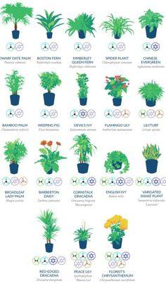 NASA Guide to Air Filtering Houseplants