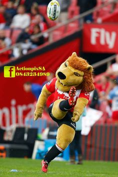 Golden Lions, Rugby, Game, Sports, Hs Sports, Gaming, Toy, Sport, Games