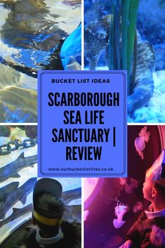 Review of the Scarborough Sea Life Sanctuary Aquarium in North Yorkshire. Find out all the great and a few very unique things you can do there #aquarium #sealife #scarborough Days Out In Yorkshire, North Yorkshire, Outdoor Playground, Outdoor Pool, Weedy Sea Dragon, Sea Life Centre, Days Out In London, Bucket List Life, Things To Do