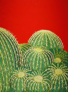 Southwest Contemporary Art - Barrel Cacti Painting  - Karyn Robinson