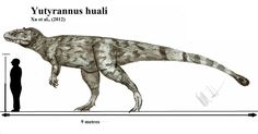 Yutyrannus, the biggest featherd dinosaur found so far, is a big genus of tyrannosauroid theropod from china. It was about 9 metres long and estimated to have had a weight of 1,5- 2 tons. Yutyrannu...