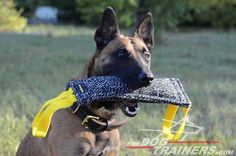 Buy French Linen Bite Dog Tug for Training. It is super safe for dog's teeth and comfy to use. Malinois Dog, Belgian Malinois, Dog Training Equipment, Dog Muzzle, Dog Teeth, Dog Harness, Dog Supplies, Your Dog, Pitbulls
