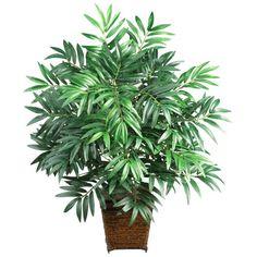 amboo Palm(Chamaedorea palmeira): Ele ajuda a absorver gases tóxicos e age como um umidificador natural.