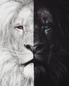 WHICH SIDE ARE YOU? COMMENT LIGHT or DARK Choose wisely and quickly because well shoutout some of the first commenters You have created a masterpiece keep inspiring us with your stunning content Art by Lion Hd Wallpaper, Tier Wallpaper, Animal Wallpaper, Animals Beautiful, Cute Animals, Wild Animals, Baby Animals, Lion Photography, Portrait Photography
