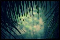 Memories Through My Lens