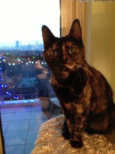 Charlotte Cat.