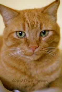 Pug ...beautiful Ginger cat