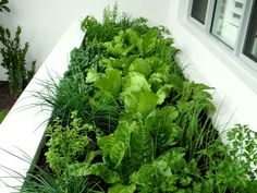Herb garden next to BBQ area