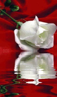 Amar é viver* - imagem de amor•*•❥ - Comunidad - Google+