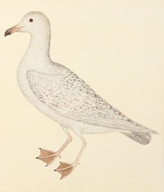 Olof Rudbeck bird prints are very popular with designers for their simplicity. Giclee reproductions framed in period wood frame styles. Made in USA by Museum Outlets Bird Prints, Wall Art Prints, Vintage Bird Illustration, Swedish Interiors, Fine Paper, Hallway Decorating, Decorating Ideas, Vintage Birds, Sea Birds