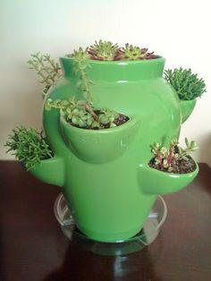 succulents and terrariums
