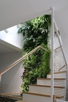 greenwall, vert, plante, design, naturel, moderne, bien-être, vie, mur végétal, vertical, maison, détente, intérieur, escaliers, famille, lumière Jolie Photo, Plantation, Stairs, Architecture, Design, Home Decor, Houses, Plant Wall, Stair Makeover