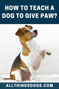 With the Paw dog trick, your dog learns to place his paw in your outstretched hand; like a handshake, but better. Read on to learn how to teach a dog to give paw. Teach Dog Tricks, Online Pet Store, Terrier Breeds, Best Dog Training, Dog Hacks, Dog Behavior, New Puppy, Dog Walking, Dog Owners