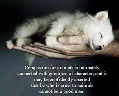 @AmyRoseKathryn @treasures999 @_AnimalAdvocate