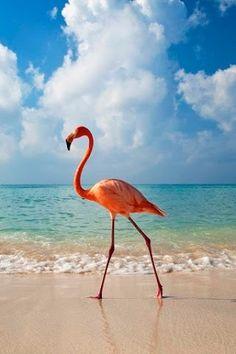 Flamingos are like lemonade with feathers....