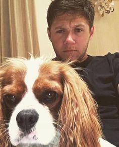 Read puppies from the story Niall's the type of boyfriend «ziall Zayn Malik, Liam Payne, Rebecca Ferguson, Simon Cowell, Irish Boys, Irish Men, Nicole Scherzinger, Shawn Mendes, Yasmina Khadra
