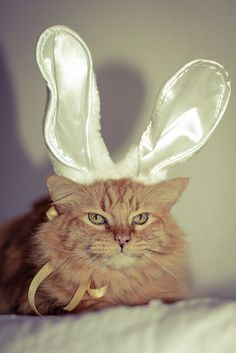 Happy Easter by Kilkennycat Crazy Cat Lady, Crazy Cats, I Love Cats, Cute Cats, Easter Cats, Happy Easter, Animal Dress Up, What's New Pussycat, Cat Hat