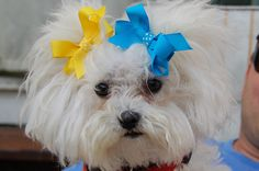 Click on the photo above to learn how to make beautiful dog bows for our special companions.