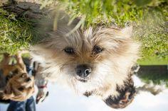 Dog Days, Dogs, Animals, Animales, Animaux, Pet Dogs, Doggies, Animal, Animais