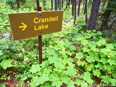 Crandell Lake Trail in Waterton Lakes National Park. Includes the Top Things To Do In Waterton Lakes National Park. Waterton Park, Waterton Lakes National Park, National Parks, Stuff To Do, Things To Do, Lake Signs, Trail, Hiking, Outdoor Decor