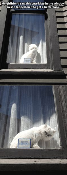 Kitty in the window… #humor #funny #lol