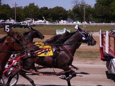 The filly pacers go in behind the starting gate of Tuesday's Race 5 at the 2012 Wayne County Fair in Wooster, Ohio. Race Horses, Horse Racing, Wooster Ohio, Standardbred Horse, Wayne County, Harness Racing, Trotter, County Fair, Tack