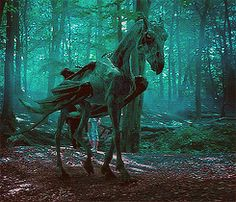 A thestral carriage ride ....amazing.