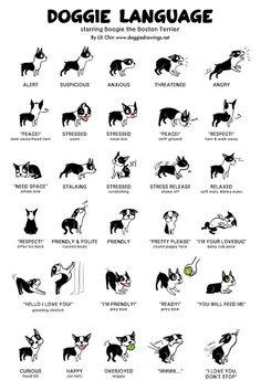 Uplifting So You Want A American Pit Bull Terrier Ideas. Fabulous So You Want A American Pit Bull Terrier Ideas. Cute Baby Animals, Funny Animals, Small Animals, Farm Animals, Dog Body Language, Dog Sign Language, Sign Language Alphabet, Learn Sign Language, Dog Facts