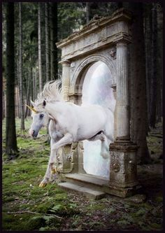 Uploaded by unicorns bitch. Find images and videos about white, magic and fantasy on We Heart It - the app to get lost in what you love. Narnia, Fairy Land, Fairy Tales, Fantasy World, Fantasy Art, Unicorn Fantasy, Magical Unicorn, Majestic Unicorn, Real Unicorn