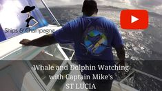 Whale and Dolphin Watching with Captain Mike's - St Lucia