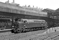 Fresh out of the box D210 at Euston, 6/59.