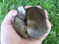 baby koala<----- I don't know who wrote this but this animal is a bunny, not a koala. Tiny Bunny, Cute Baby Bunnies, Funny Bunnies, Cute Babies, Animals And Pets, Baby Animals, Animals Photos, Super Cute Animals, Adorable Animals