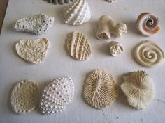 Jenny Davies-Reazor - impressions of shells & corals in polymer clay