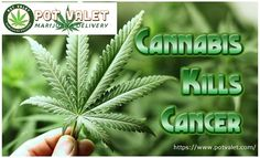 The US government has confirmed that #Medical  #Marijuana can kill cancer. So Keep kalm and Enjoy #Weed #Cannabis:   https://www.potvalet.com/products