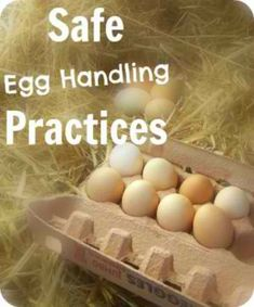 Safe Egg Handling Practices | Are we doing it right? People are passionate about how they choose to store their freshly collected eggs. Do cultural differences play a part in the decision you make? Do new chicken owners with no guide to pass down the skills make different decisions than someone who has a family that raised chickens for years? #raisingchickensforeggs