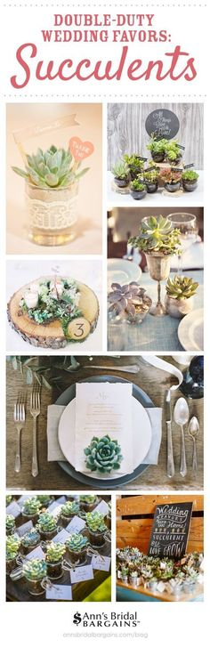 Favors As Centerpieces: Succulents