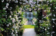 11 Amazing Professional Garden Photographs - http://mostbeautifulgardens.com/11-amazing-professional-garden-photographs/