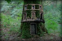 Renklim Blog – Burada renkli bir şeyler var! – Ağaçların üzerine yapılmış etkileyici evler