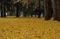 Park of the late fall by kazumi Ishikawa on 500px