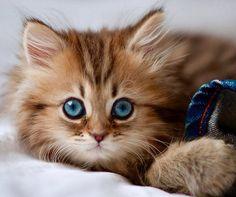 Pretty kitty | The Most Photogenic Kitten on the Internet | Loves Animals