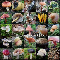 Compilation Mushrooms NL FX 2013