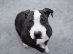 TO BE DESTROYED 03/07/17 **NEEDS A NEW HOPE RESCUE TO PULL**