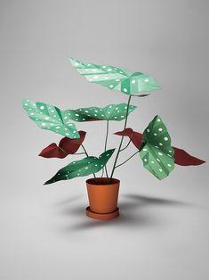 Paper garden - Fideli